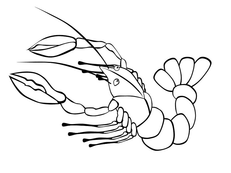 Omalovánky mořští živočichové