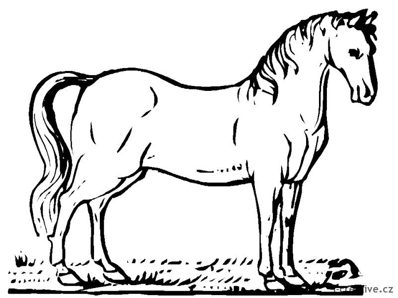 Kreslené obrázky k vytisknutí pro milovníky koní pokud chcete