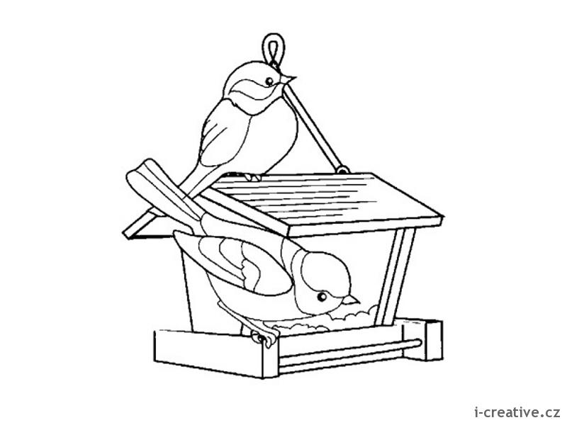 Ptáci nejraději zobají různá semínka hlavně proso konopí a