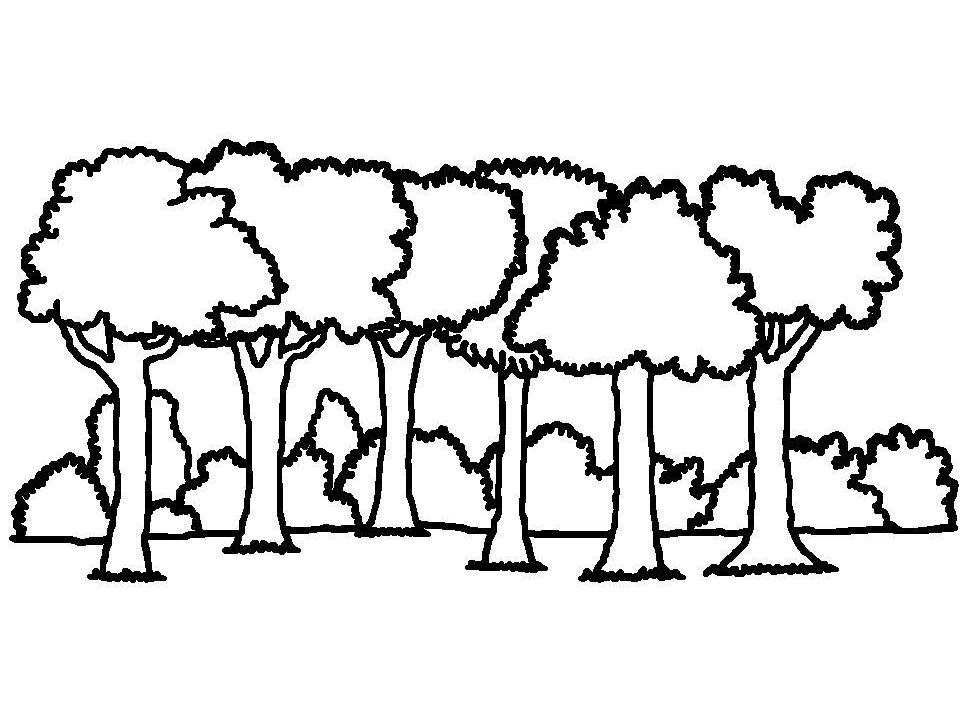 Les lesní omalovánky