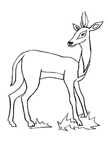 Básnička o lese lesní zvířátka