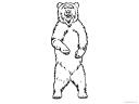 medvěd na zadních