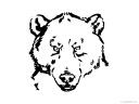 medvěd hlava