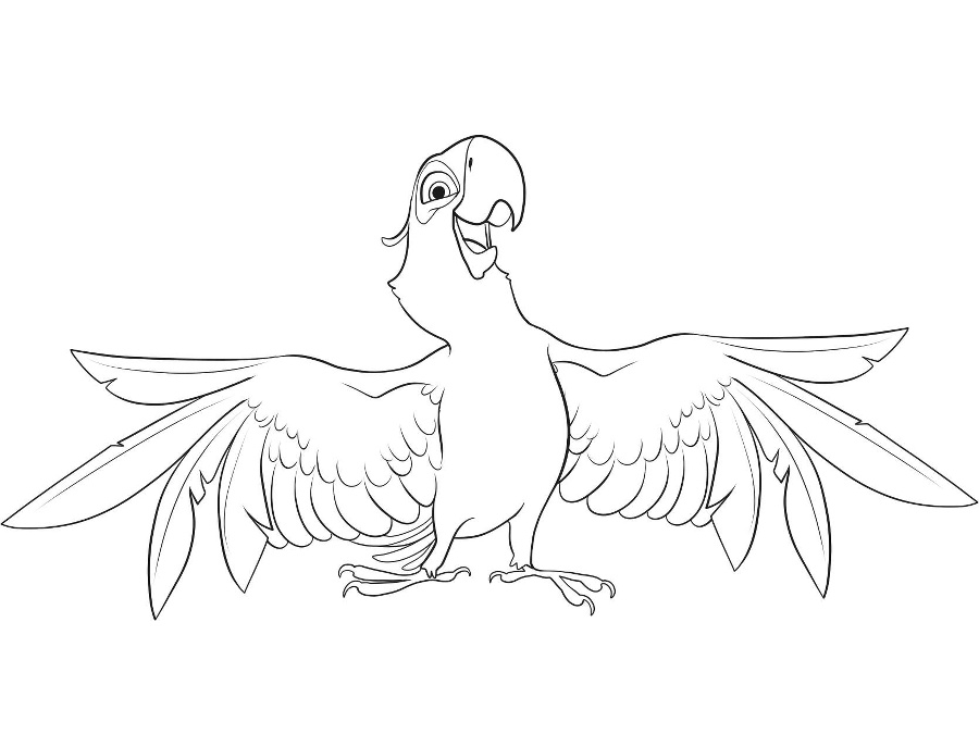 Papousek Colouring Pages