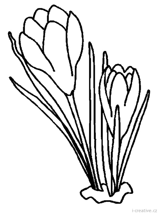 Free Coloring Pages Of Crocus