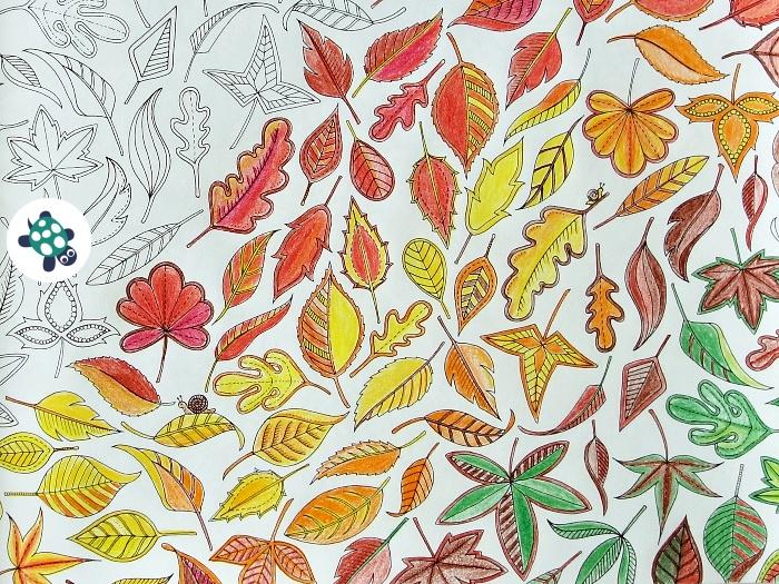 Tajná zahrada omalovánka listy